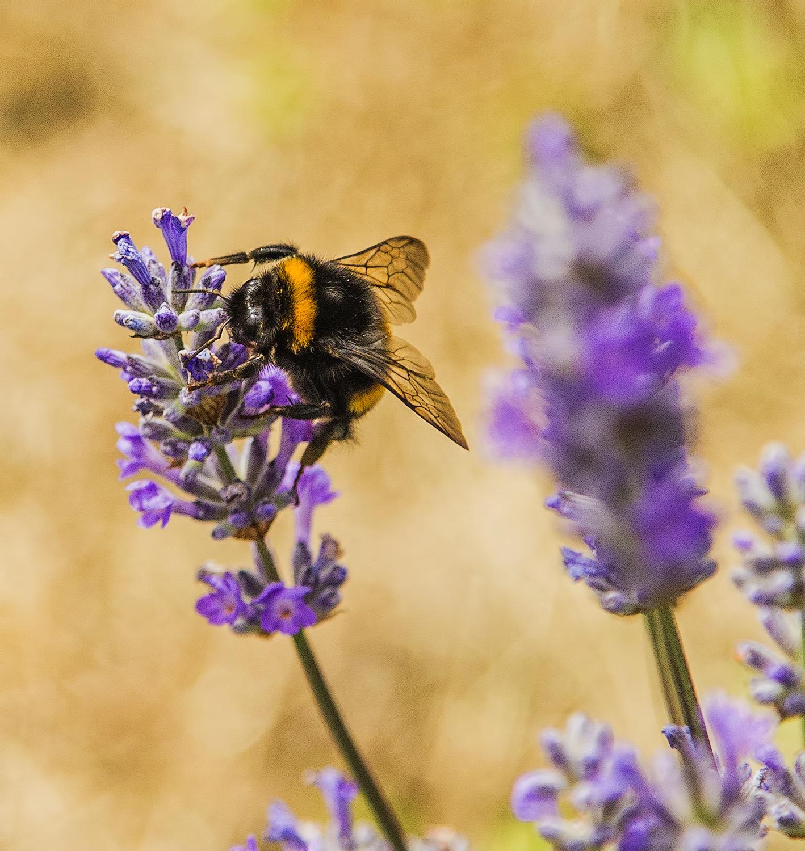 20160702-Lavender Farm wshop-IMG_6279 copy_1500px